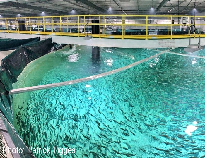 Huon Aquaculture Whale Point